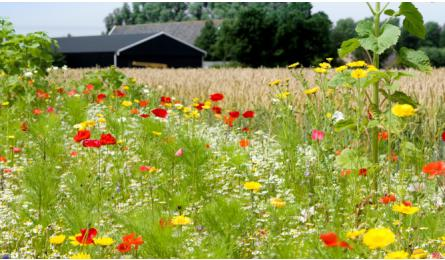 Praktisch agrarisch natuurbeheer dat loont
