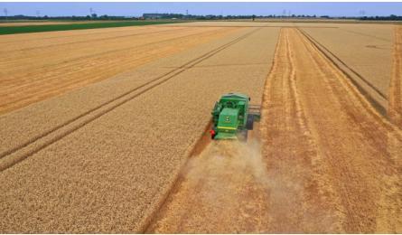 De tarwe-toppers van dit jaar