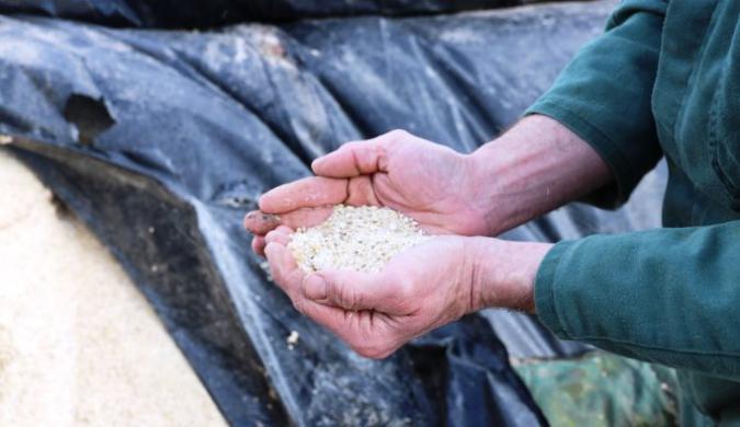 """""""Kansen voor veldbonen als krachtvoer in veehouderij"""""""