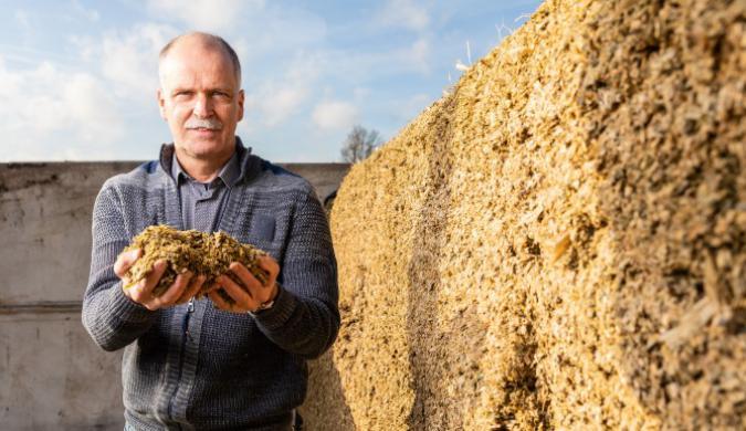 Pensenergie uit maïs goed voor koe en klimaat